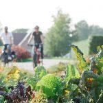Der Gemüsetörn - Rundtour entlang endloser Gemüsefelder