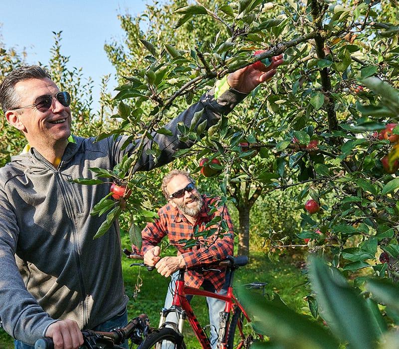 Der Obsttörn - Rundtour entlang der Krückau und das Obstgebiet