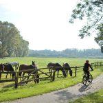Der Weidentörn - Rundtour in der Engelbrechtschen Wildnis über Herzhorn