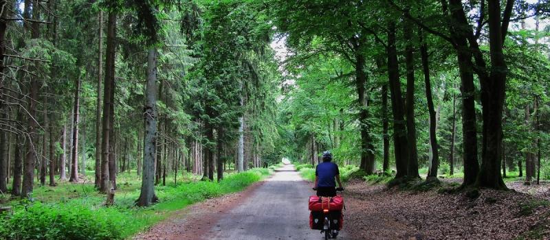 Segeberger Forst -c- Moenchsweg e.V. - Blaasch
